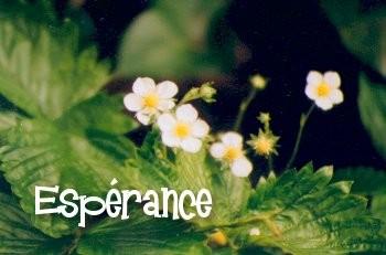 medium_esperance.jpg