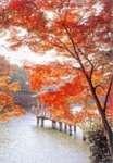 medium_paysage-automne.jpeg