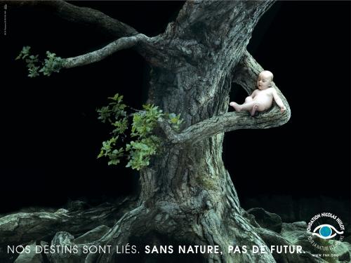 arbre_HULOT.jpg