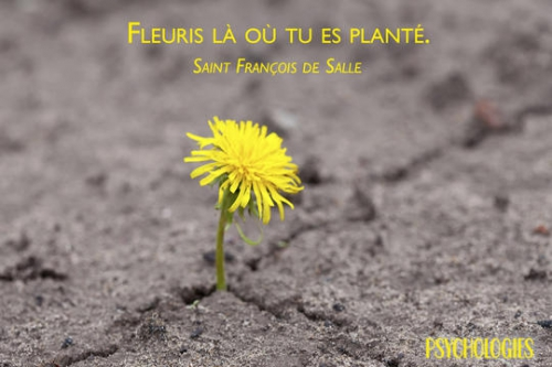 Fleuris-la-ou-tu-es-plante_imageWidth540.jpg