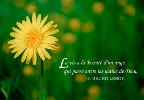 aimer-la-vie-1200401803-1313399.jpg