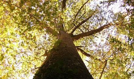 2487_tree_440x260.jpg