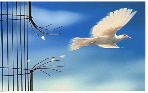 colombe.jpg